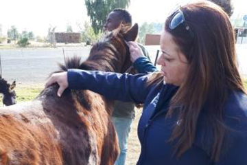 Staff work with African university and global charity to improve equine welfare