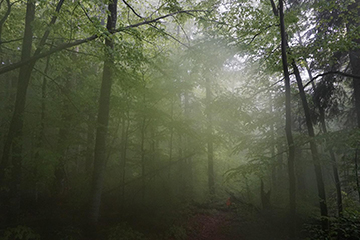 Ancient beech forests inscribed on UNESCO World Heritage List